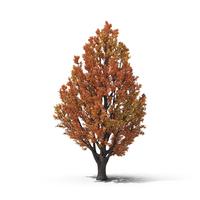 Autumn Tree Object