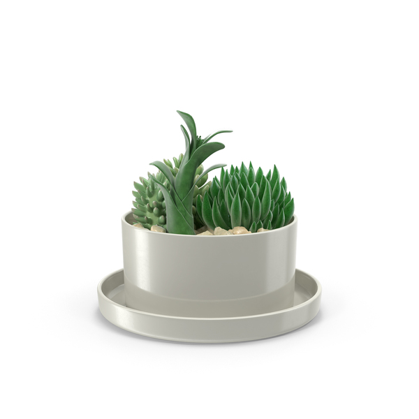 Succulents in Pot Object