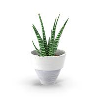 Aloe in Pot Object