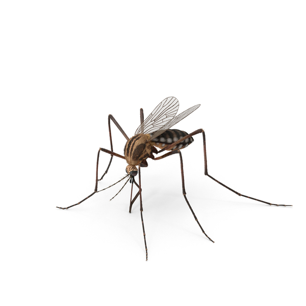 Mosquito Object