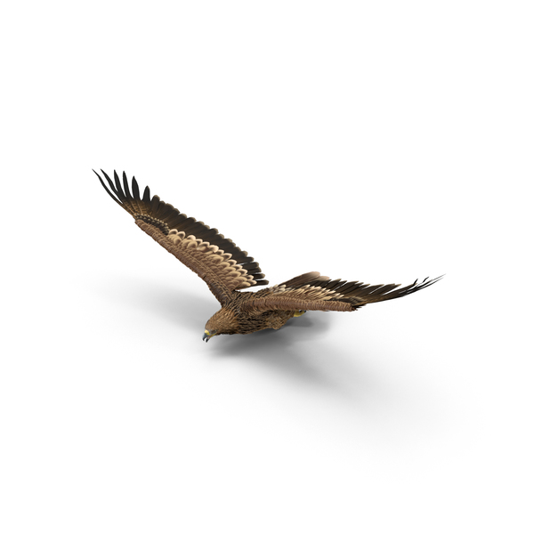 Imperial Eagle Object