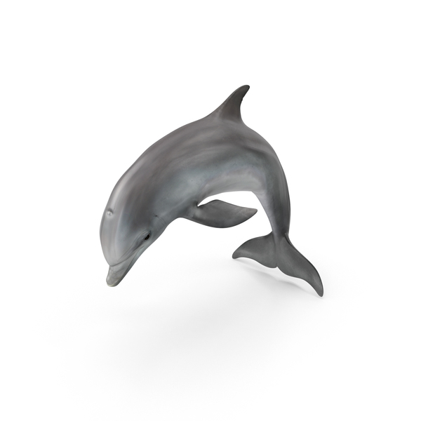 Dolphin Object