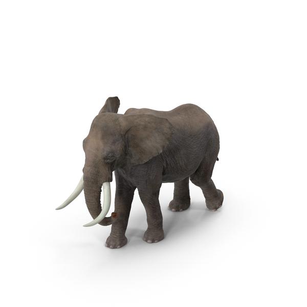 Elephant Object