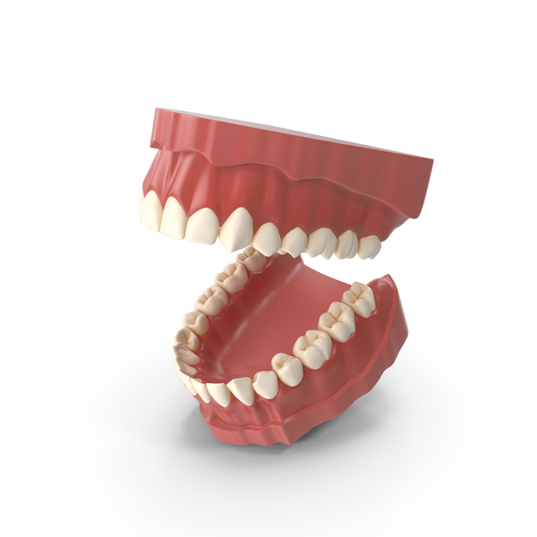 Teeth Object